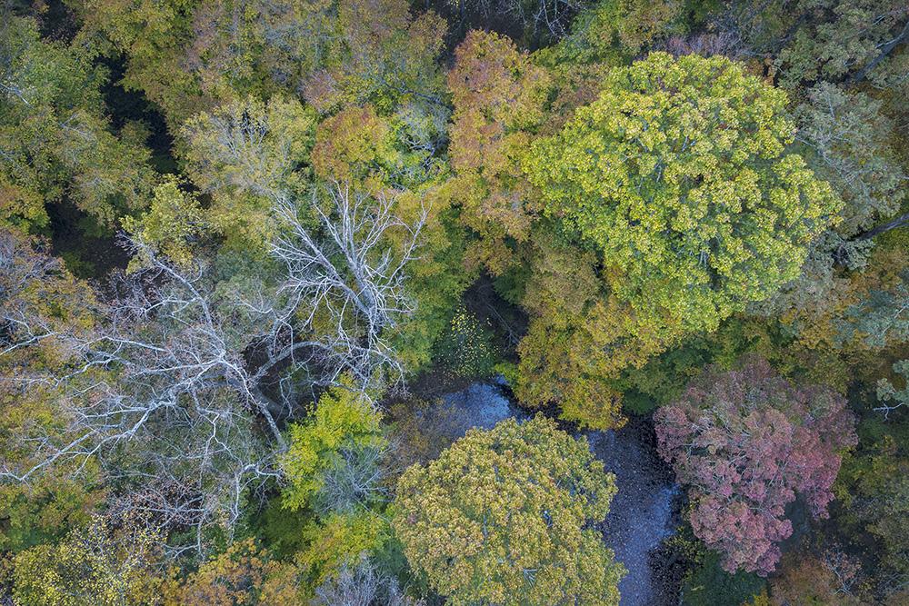 Fernbank Forest, Atlanta, GA