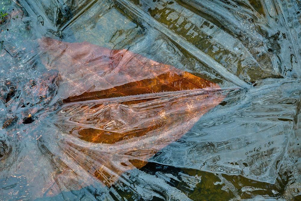 023_Ice, leaf