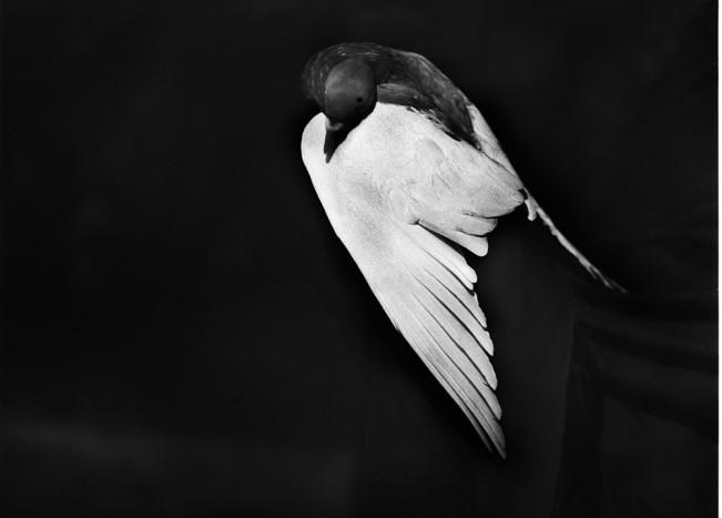 Good Luck Bird