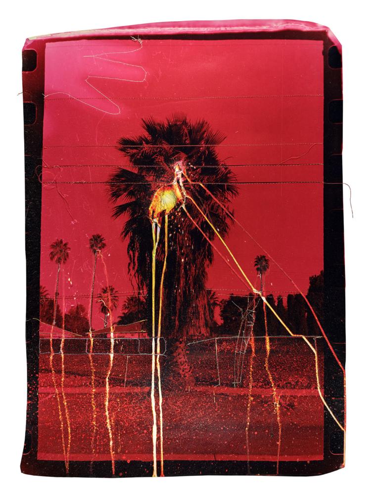 4 Andrew K Thompson_Bleeding Palm tree_2018