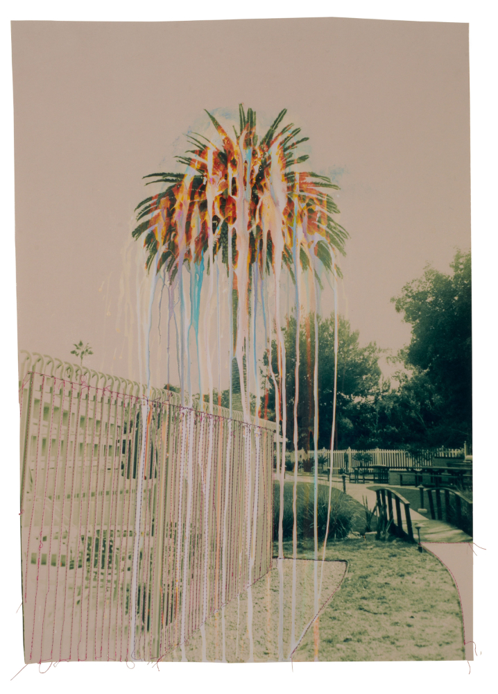 Green Rainbow Palm Tree