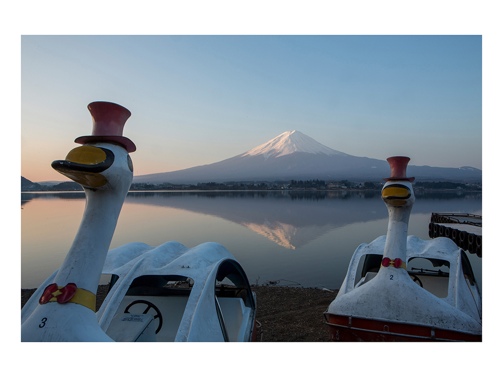 Lake Kawaguchiko, Yamanashi Prefecture, Japan -March 28 2016: Framed by duck-like rental pedal boats, snow capped Mt. Fuji reflects in the waters of Lake Kawaguchiko at sunrise (photo Gilles Mingasson for the Smithsonian Magazine).