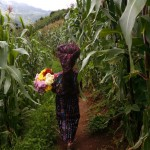 "Isabel Chopen Zotoi walks with flowes to adorn the houses in ""El Adelanto"" village, Solola, where forensic antrophologists are exhuming skeletons in a mass grave where 12 persons were buried after being massacred by the Guatemalan  army in 1982, Friday, Aug 31, 2007. Forensic antrophologists try to recover the remains of some 20 persons murdered, but 8 of them will not be exhumed yet because the owners of the lands where they were buried want to wait until they pick their corn crops before allowing the  exhumkation work of the antrophologists. During the Guatemalan Civil war, more than 200.000 people were killed or dissapeared. (AP Photo/Rodrigo Abd)"