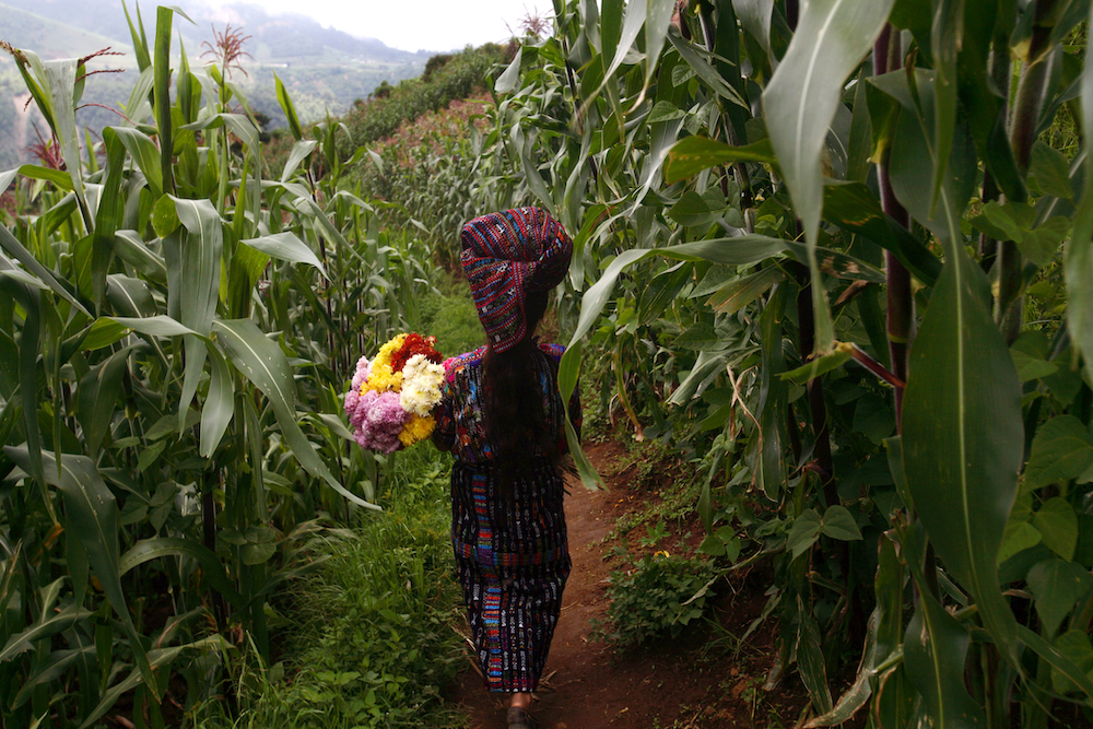 """Isabel Chopen Zotoi walks with flowes to adorn the houses in """"El Adelanto"""" village, Solola, where forensic antrophologists are exhuming skeletons in a mass grave where 12 persons were buried after being massacred by the Guatemalan  army in 1982, Friday, Aug 31, 2007. Forensic antrophologists try to recover the remains of some 20 persons murdered, but 8 of them will not be exhumed yet because the owners of the lands where they were buried want to wait until they pick their corn crops before allowing the  exhumkation work of the antrophologists. During the Guatemalan Civil war, more than 200.000 people were killed or dissapeared. (AP Photo/Rodrigo Abd)"""