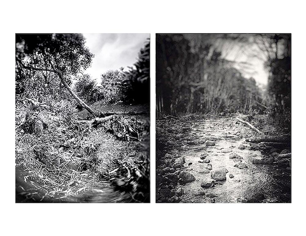 Jeon_Fallen_Trees_In_Hilo__Ka'ahakini_Stream