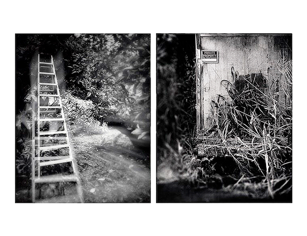 Jeon_Ladder_In_Mango_Tree__Abandoned_Home_In_Hamakua