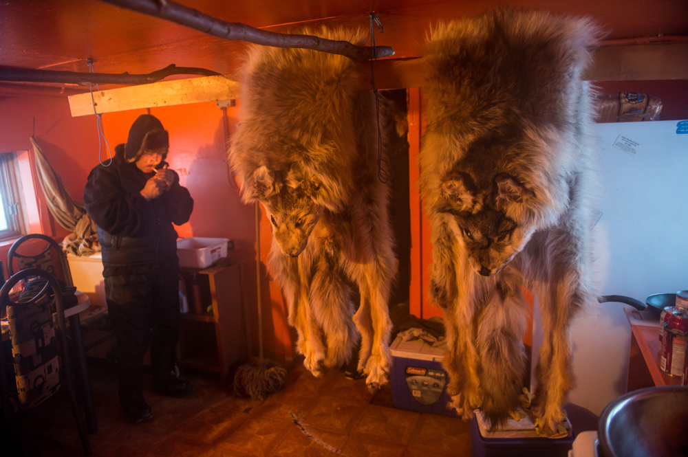 Modeste Eddibar lights a cigarette in his cabin after fleshing out his wolf pelts in Colville Lake, Northwest Territories. With high costs of living in remote Northern communities, some people would rather earn a living from trapping then work at the oil and gas mines nearby, which they argue cause more harm to animals than trapping.