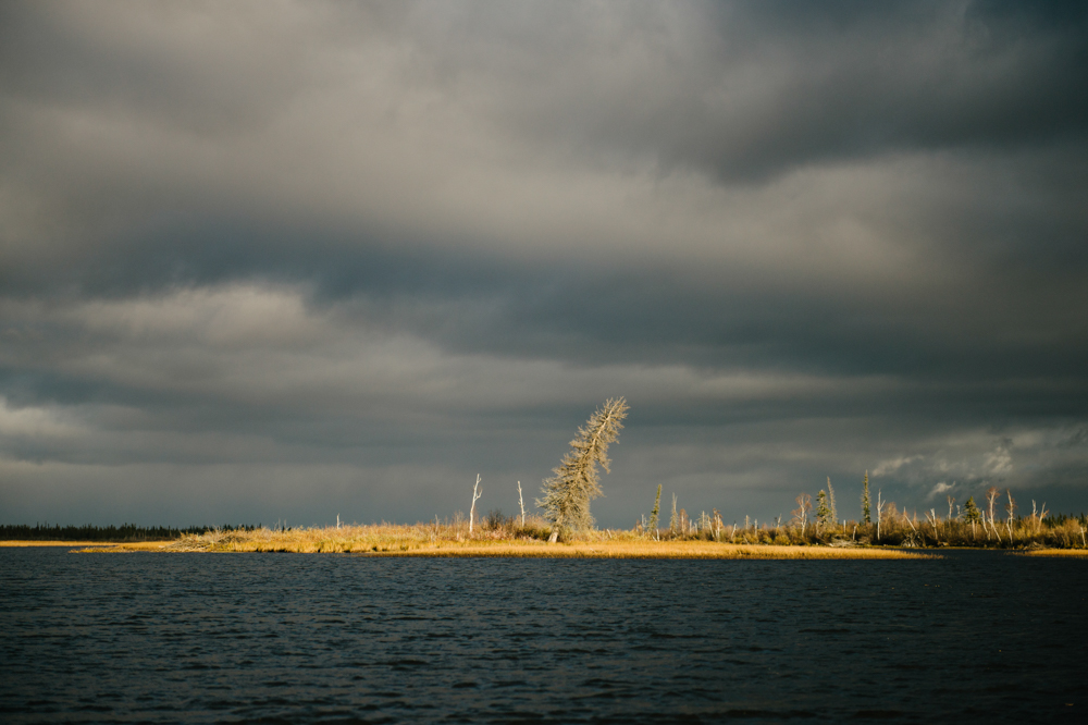 A spruce tree is lit by the sun peeking through storm clouds on Tathlina Lake, Northwest Territories. The tree acts as a navigational marker for people travelling by boat or skidoo, pointing the way around the small island to avoid rocks. The tree was tied to the ground when it was young and developed it's lean as it grew.