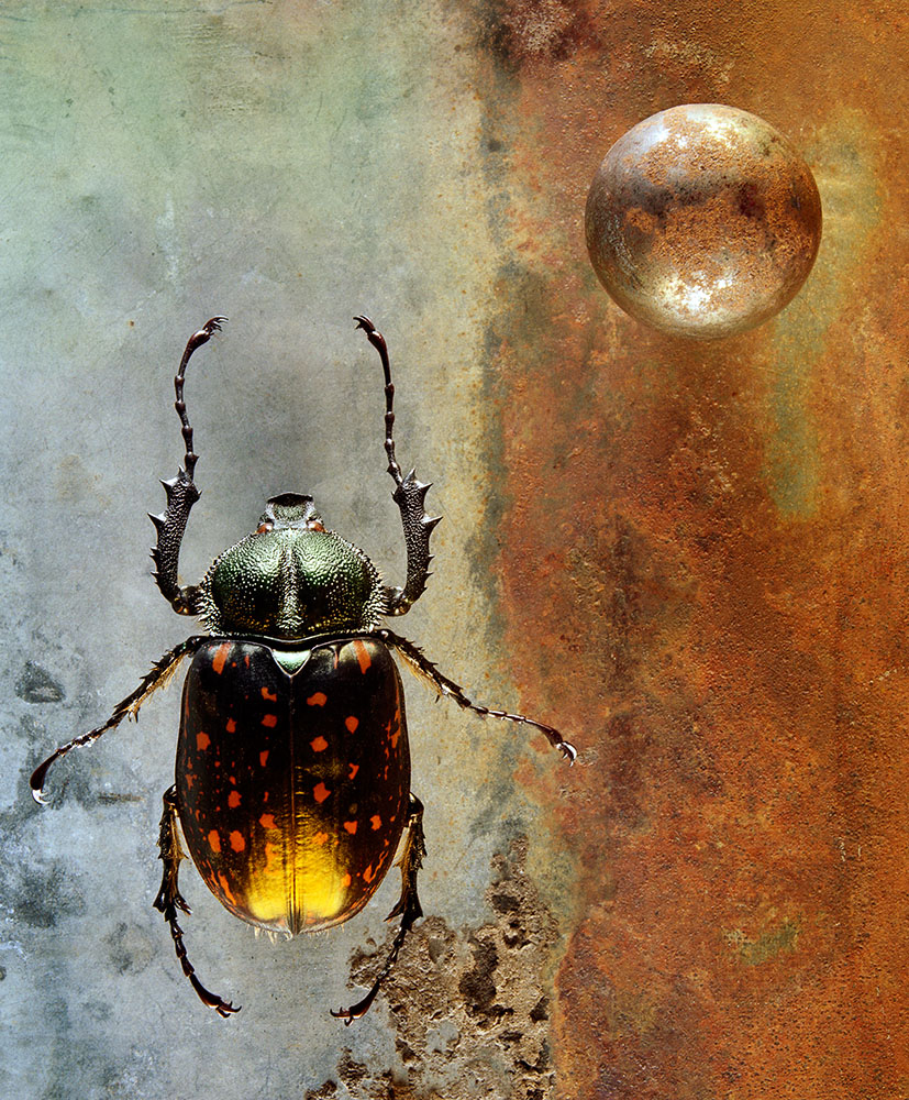 02_whaley_coleoptera
