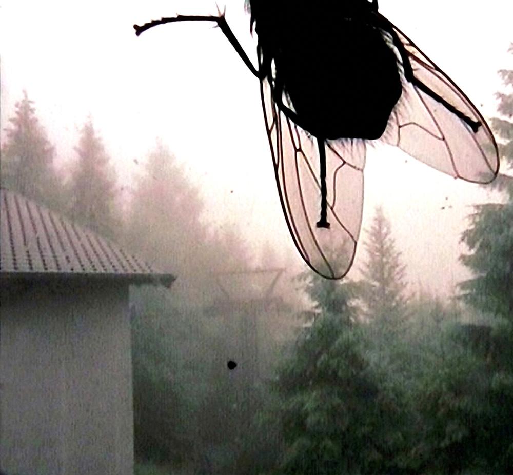 05_Kurt Caviezel, Insect (12)