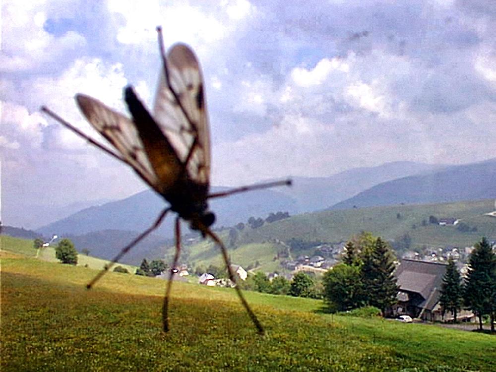 07_Kurt Caviezel, Insect (15)