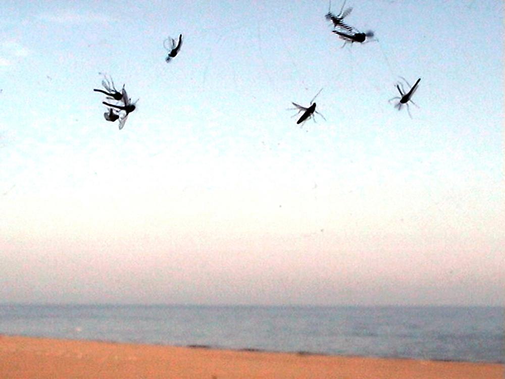 09_Kurt Caviezel, Insect (11)