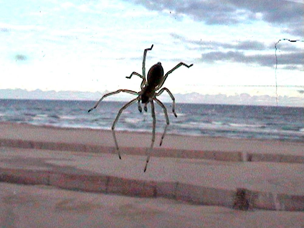 10_Kurt Caviezel, Insect (9)