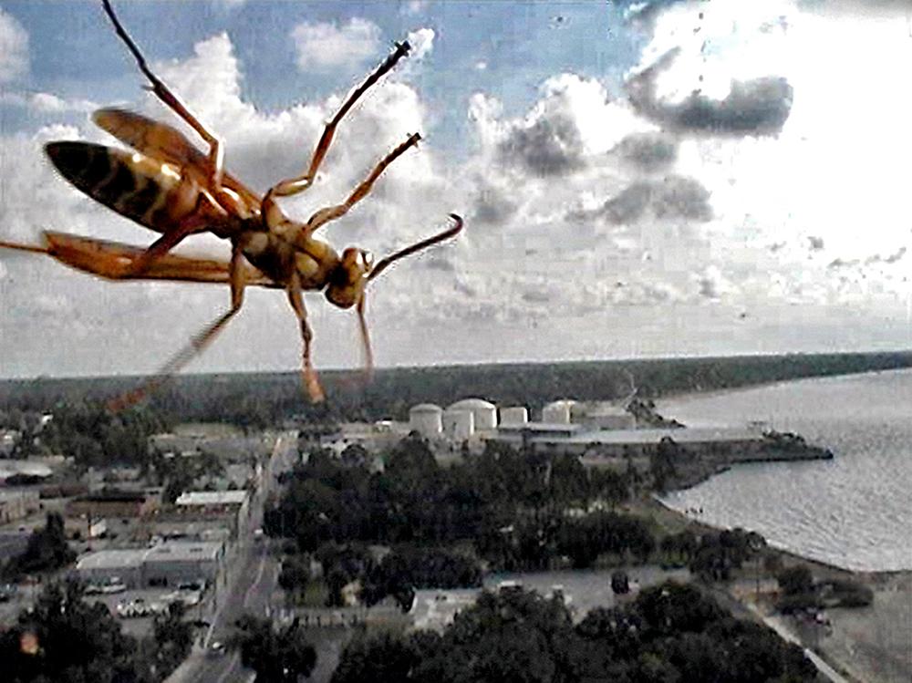 11_Kurt Caviezel, Insect (14)