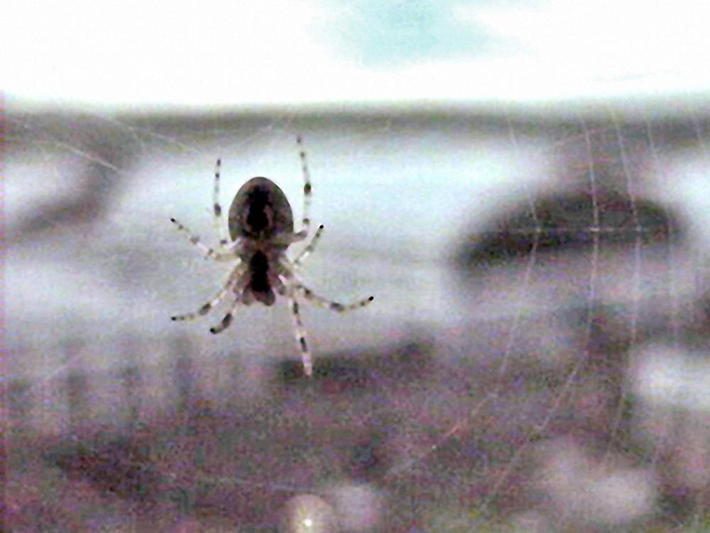 13_Kurt Caviezel, Insect (25)