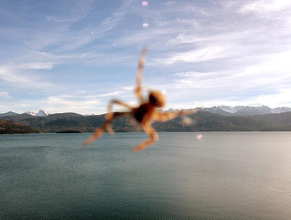 14_Kurt Caviezel, Insect (42)