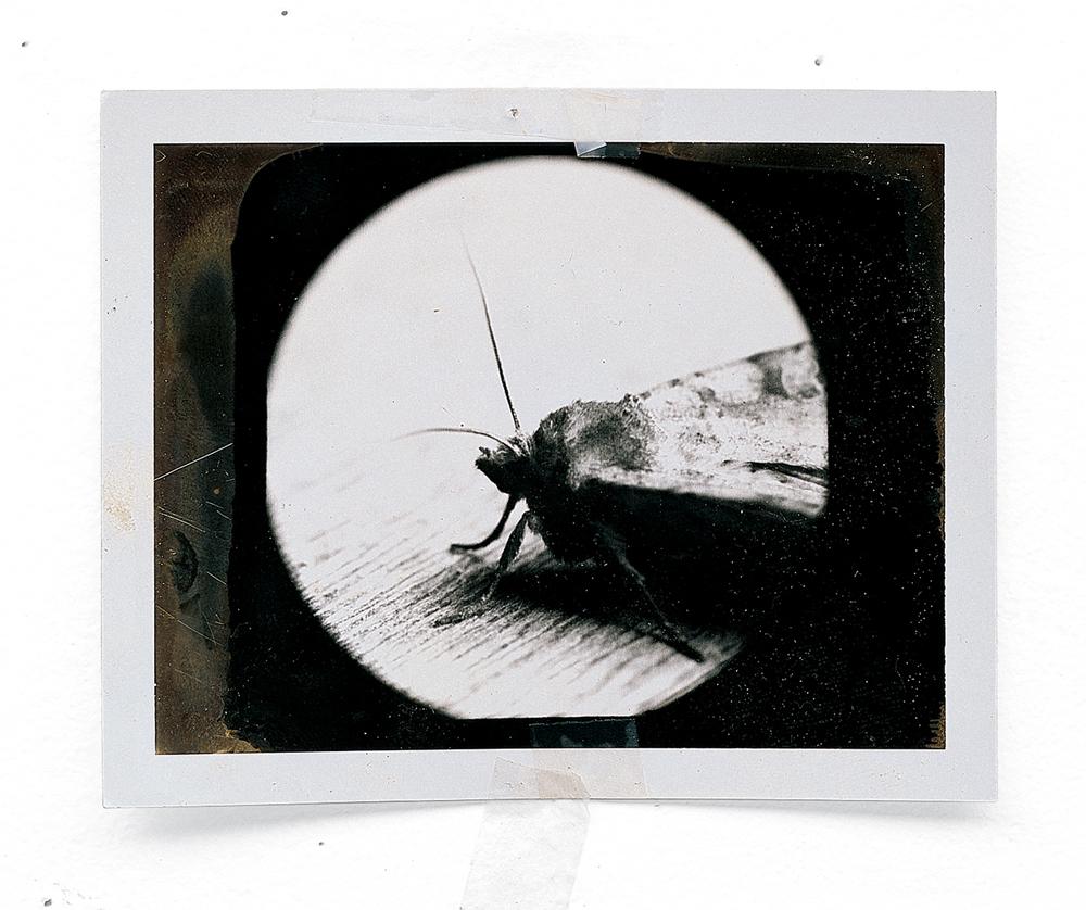 15_01_atl 4 polaroid