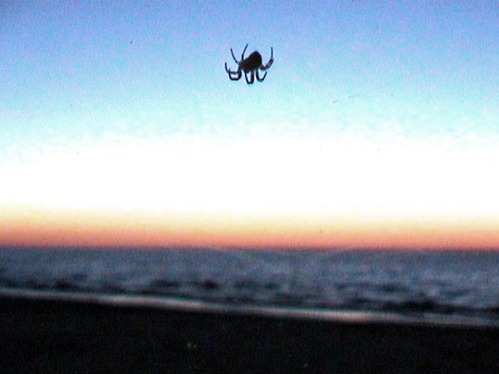 15_Kurt Caviezel, Insect (26)