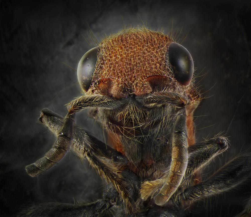 15_Velvet Ant