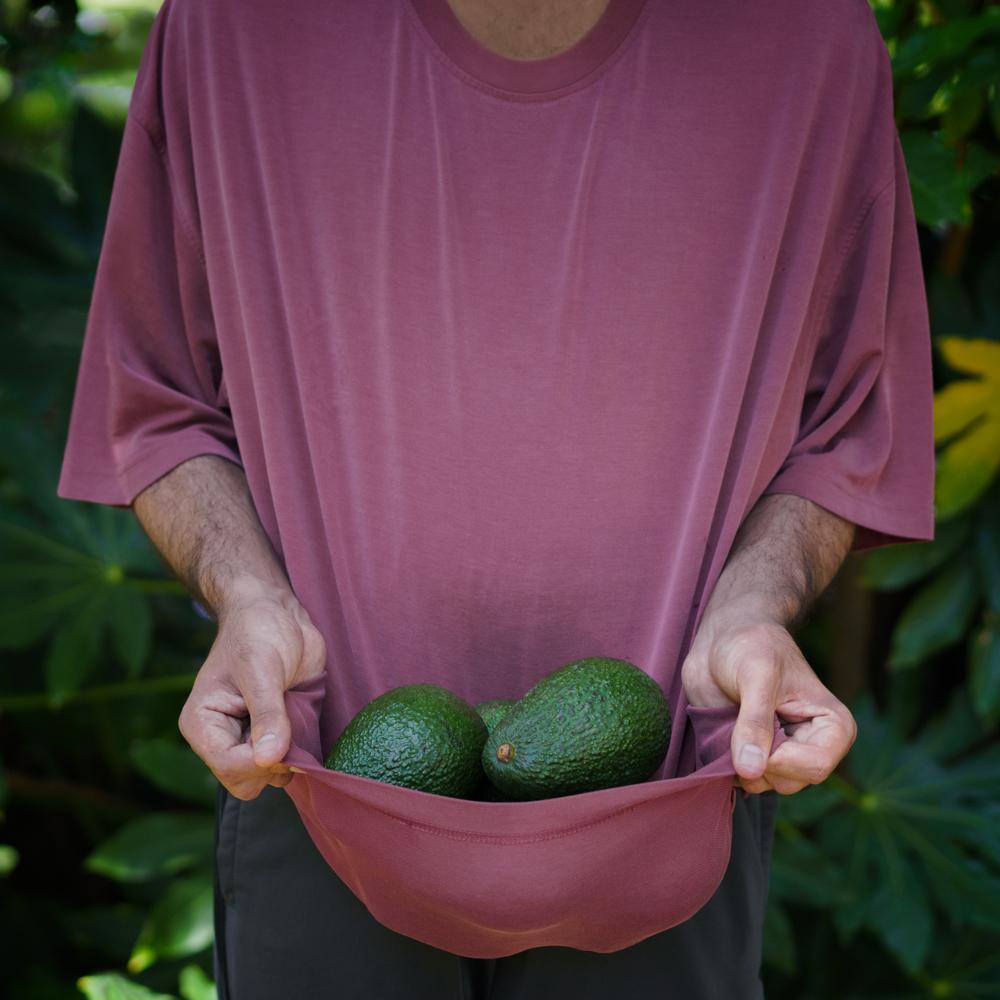 Avocados for avocado toast