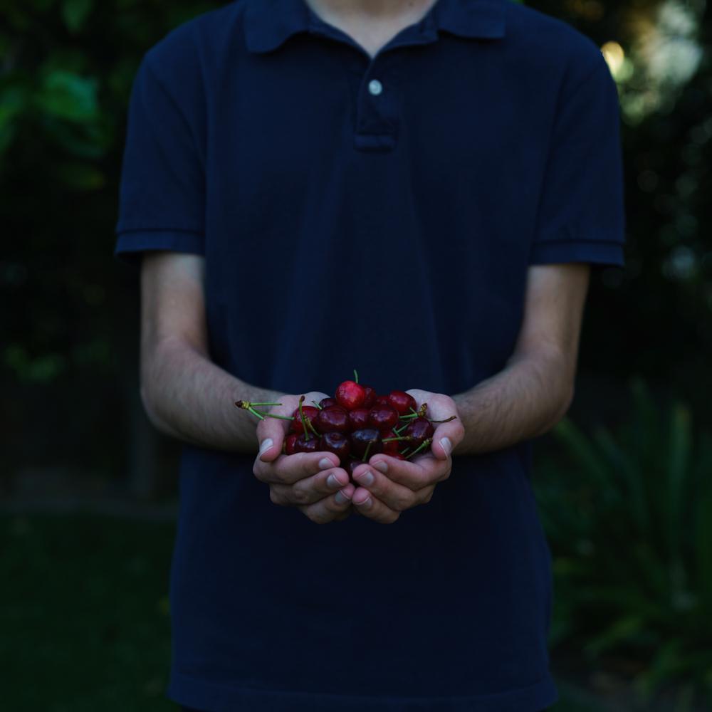 Cherries for summer cobbler