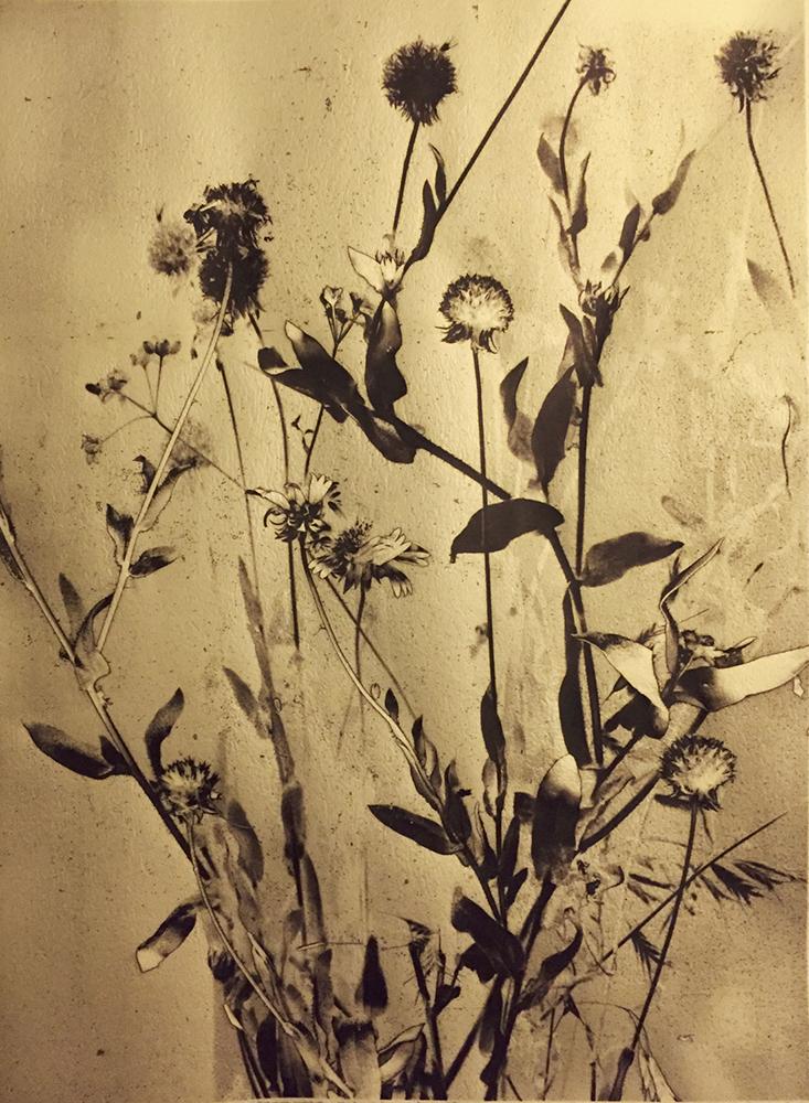 singing-of-wildflowers