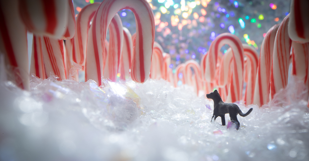 ©Tourmaline . (JNW), Candy Cane Forest, Jacksonville, FL http---toy.photography