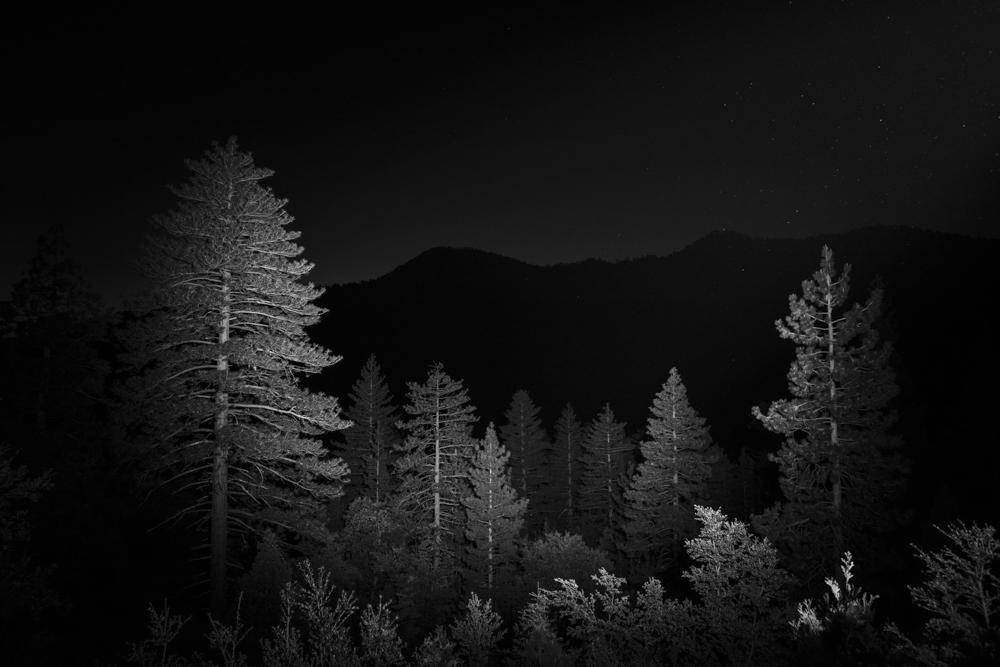 015_Overcrowded_Forest, San_Bernardino_Mountain_Range