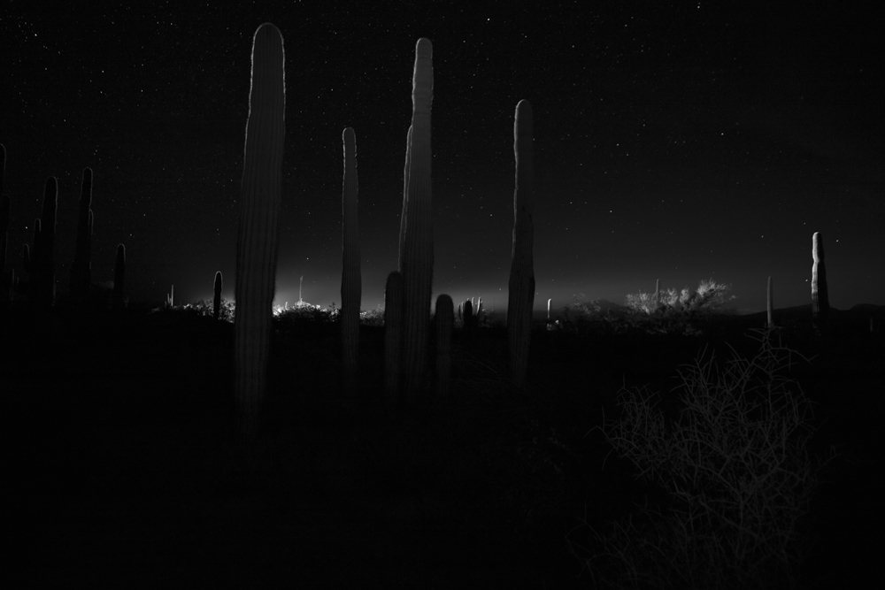 030_Saguaro_Forest_and_Vehicle_2017 (lightened forbook)