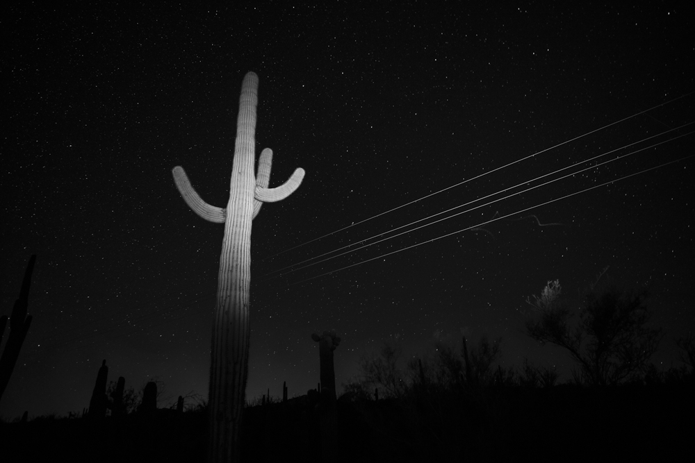 031_saguaro_power_lines and bat trail-4837 2