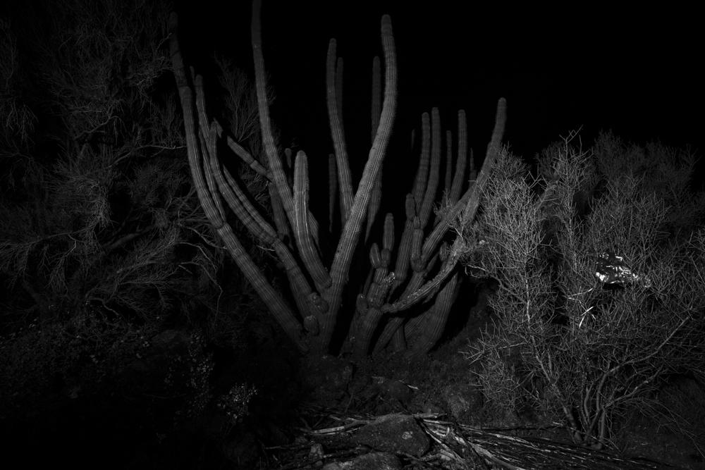 033_Organ_Cactus, Mylar_Balloon_Sonoran_Desert_FP_5078