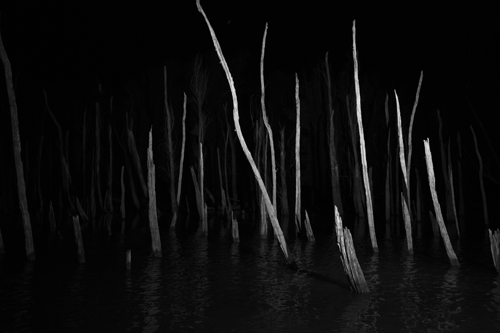 043_dead trees in oxbow lake, mississippi delta 2018 7461