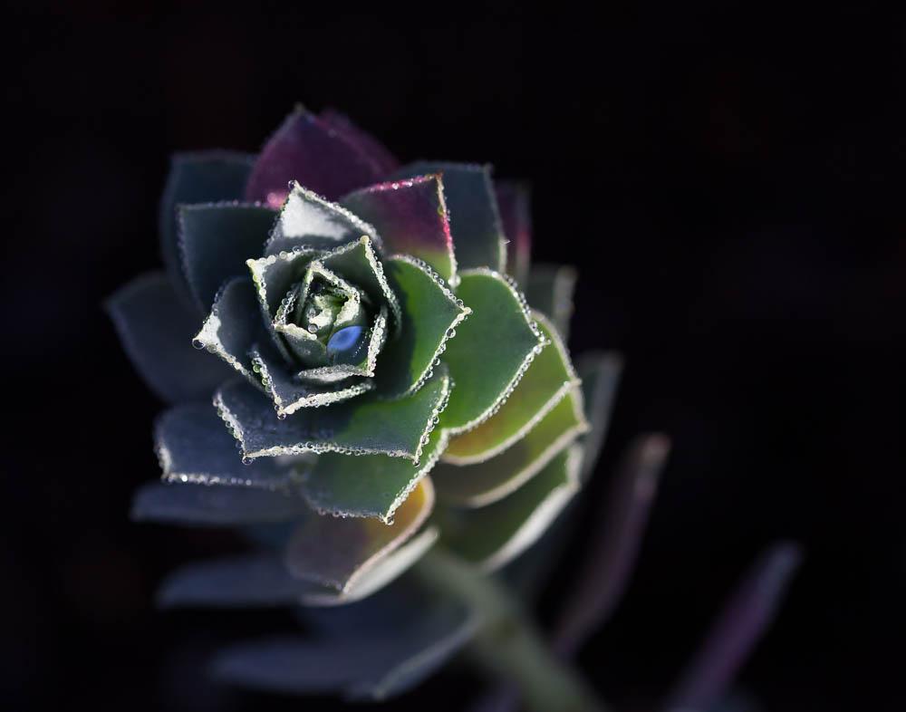 AmandaEllis_Euphorbia_2020