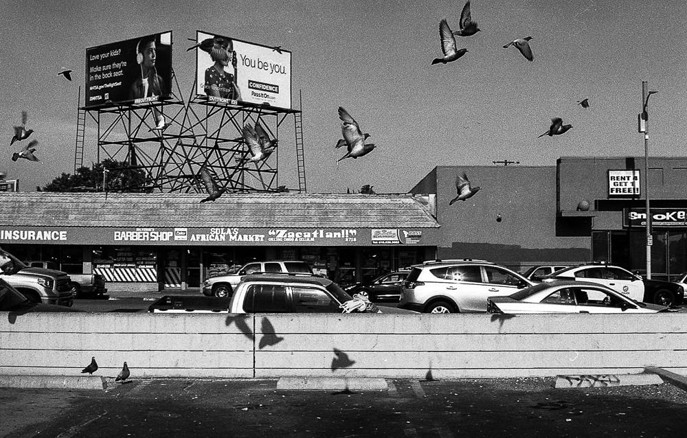Castro_Rene_Castro_Birds_In_The_Fly_North_Hills_2020