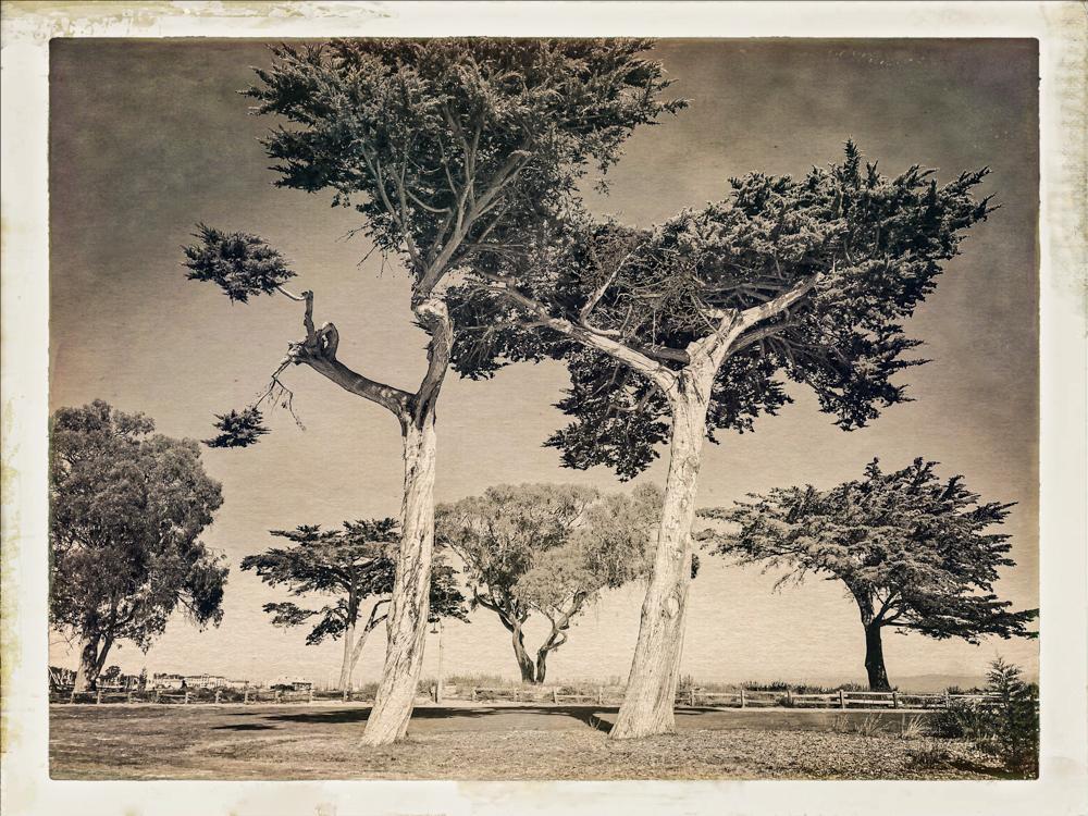 Debra Achen_Silver Trees_10