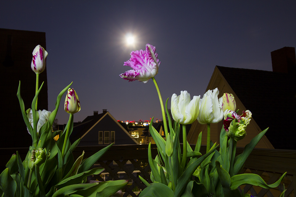 Full Flower Moon Delivers