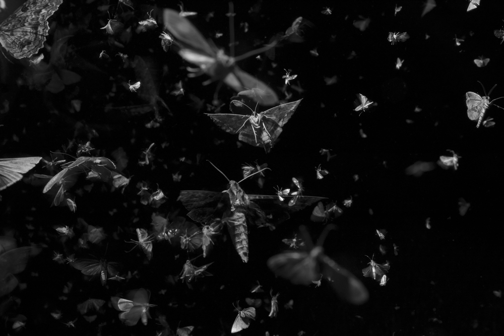 O34b_ insects_swarming_artificial_light_near_equator, panama, 2019_F3A1882