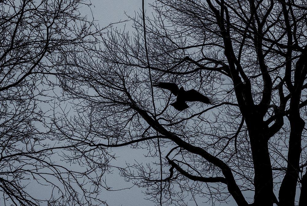Fouhse_Untitled_(crow)_Ottawa