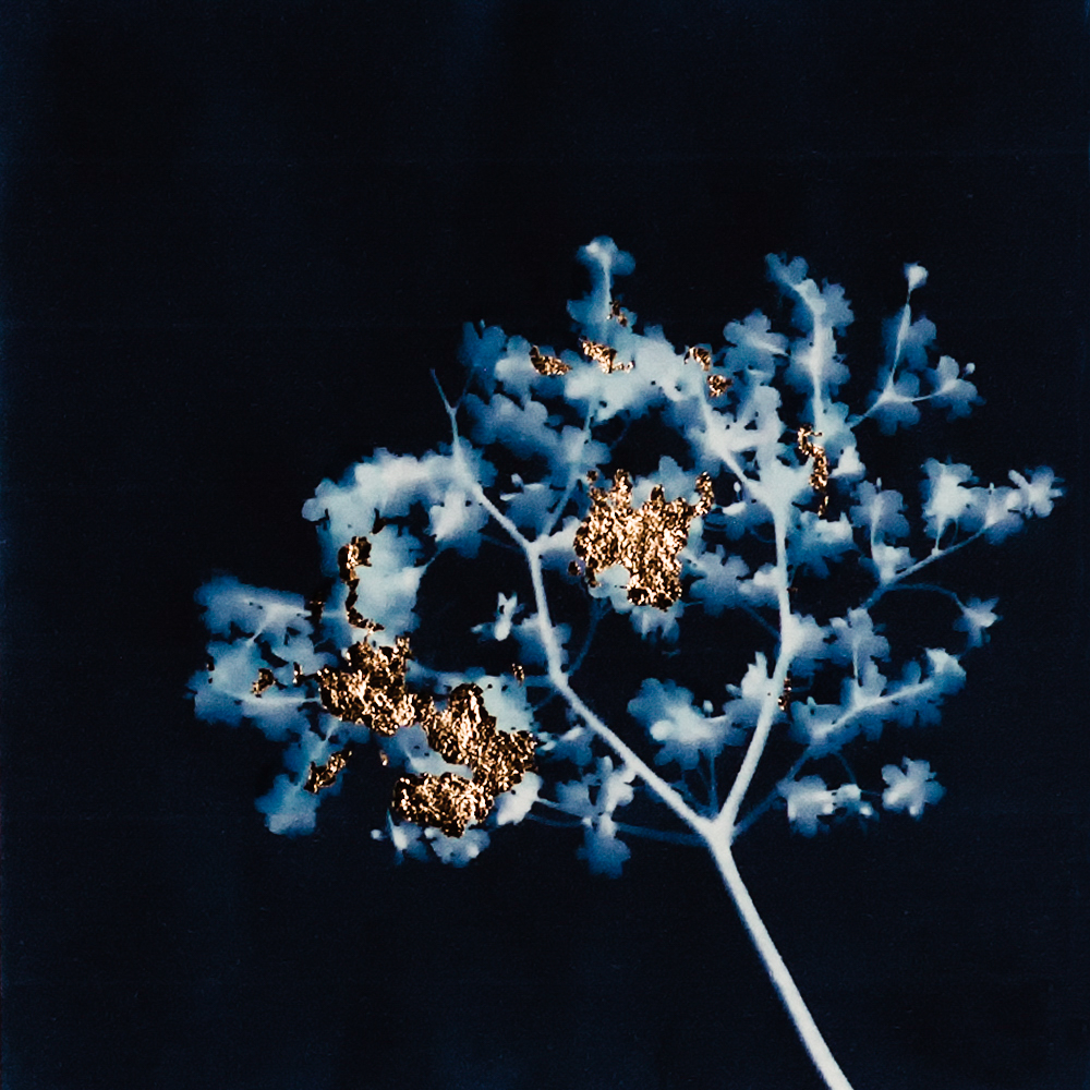 ©Cristina Paveri, Golden cyanotype, Pavia, Italy, www.cristinapaveri.com