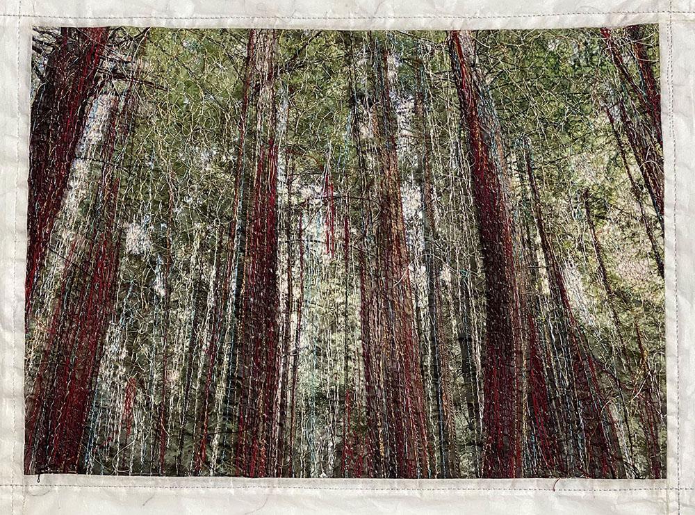 SchmidMaybach_Redwoods