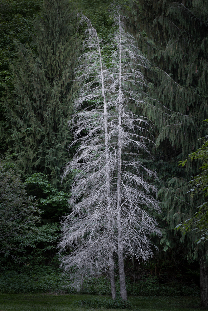 11_Ingvild_K_Melby_white-tree