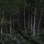 1_Ingvild_Melby_1_Forest-2