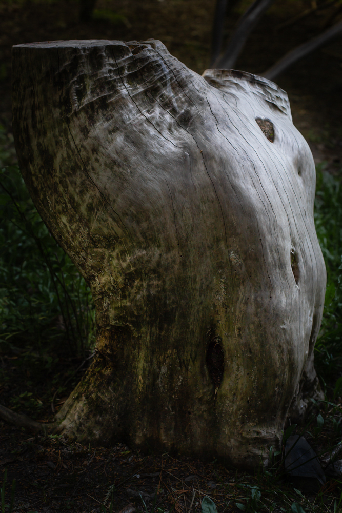 7_Melby_wooden-torso (1 of 1)-2