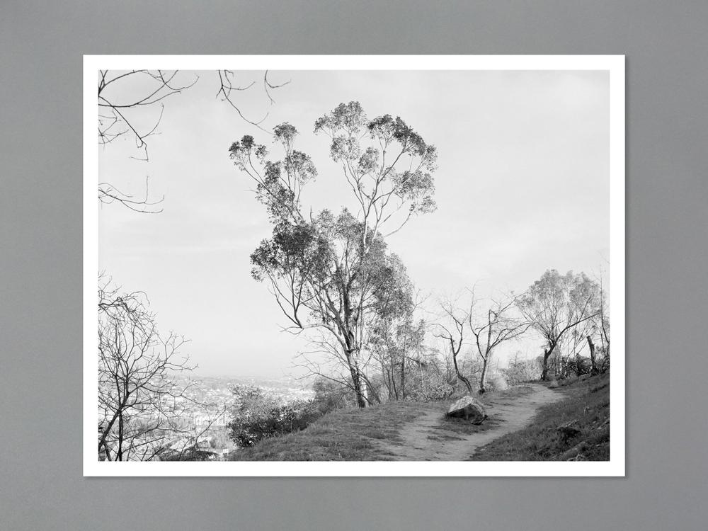 Arboreal Special edition print 1