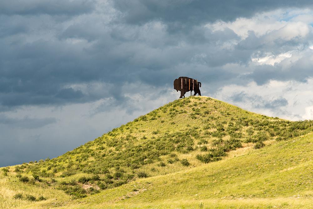 Fauxliage - Bison Sign, Carr, CO