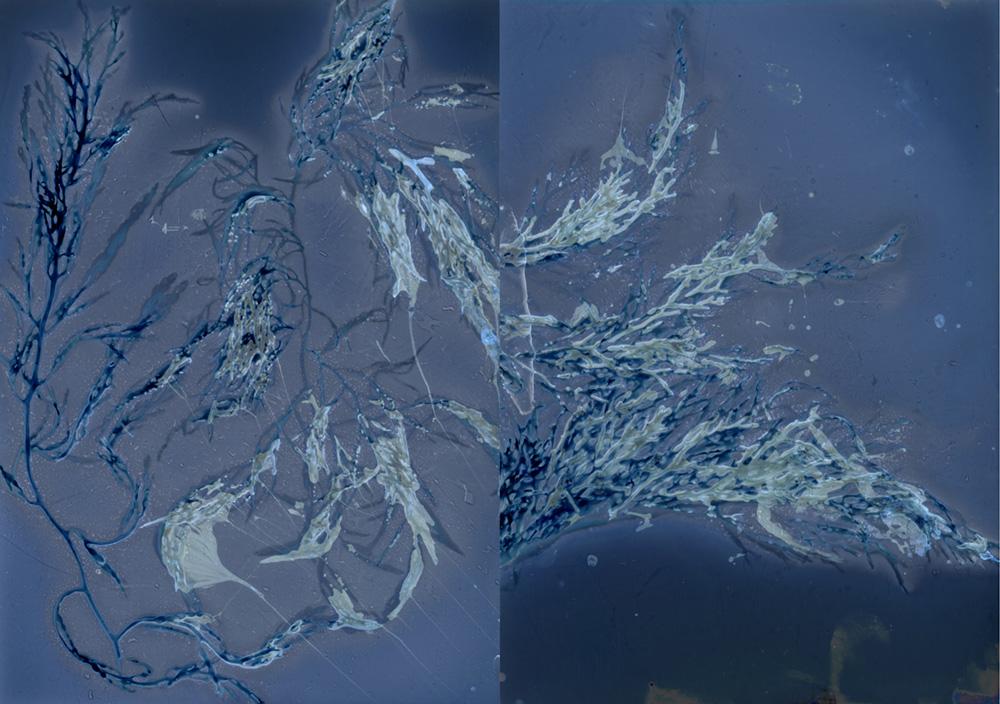 Chan_Intertidal II