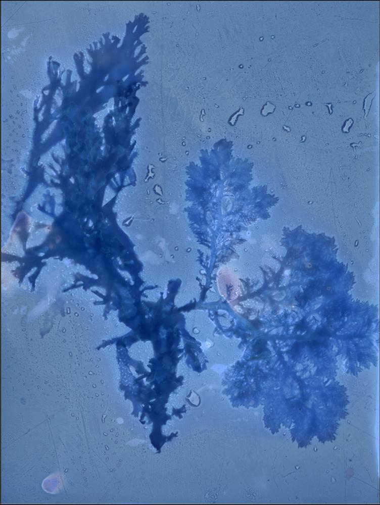 Chan_Intertidal Series, Asilomar