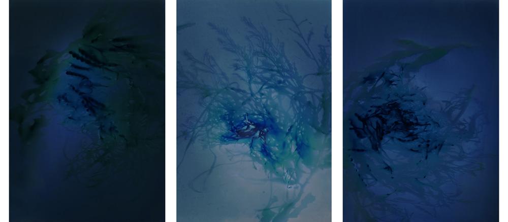 Chan_Intertidal Series I