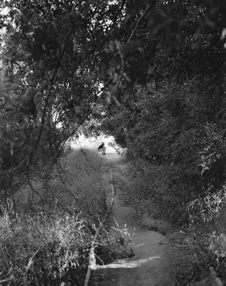 virginia-wilcox-arboreal-04