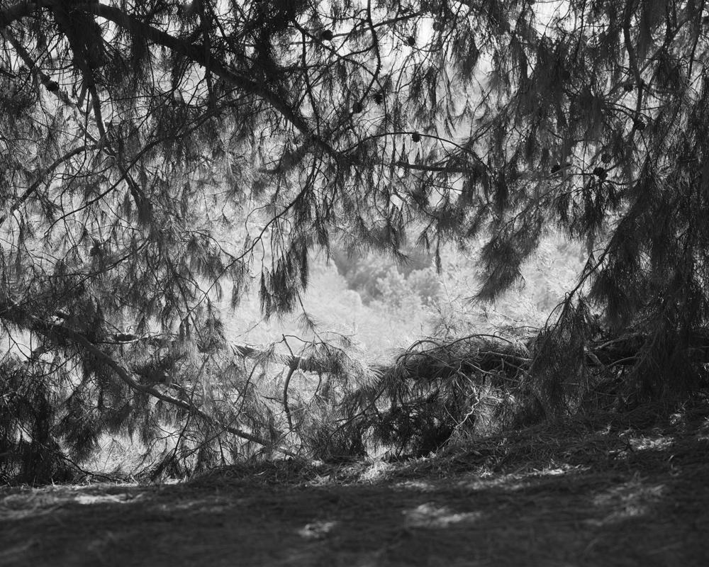 virginia-wilcox-arboreal-13